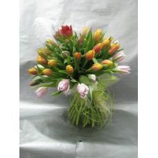 Пъстроцветен пролетен букет с 51 стръка лалета, нежна зеленина , привързан с естествена кора и рафия