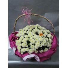 Хризантема с опаковка
