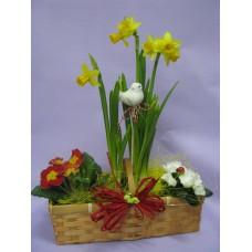 Композиция със пролетни саксийни цветя, Примула, Нарцис и Азалия в кошничка