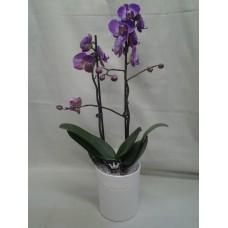 Орхидея в кашпа